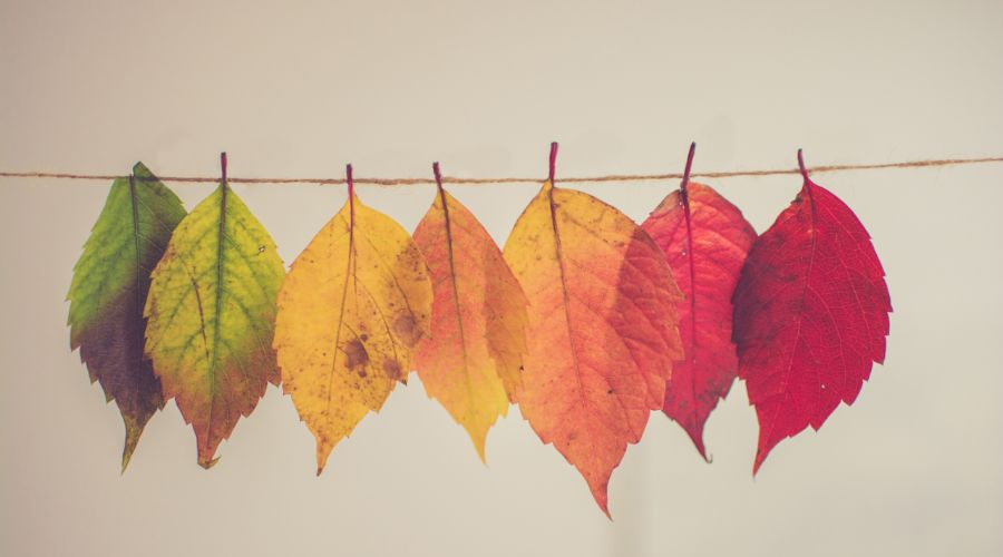 4 consejos para pagar menos luz en otoño