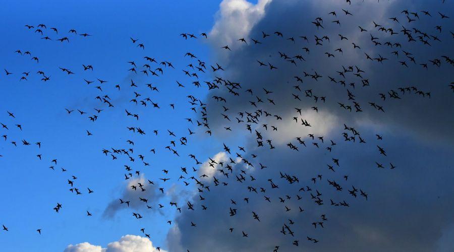 Los pájaros como ejemplo de la conducción autónoma